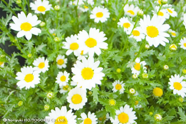 15_2007-04-13 15-30-44-flowers.jpg