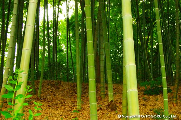 もえぎ野の竹林