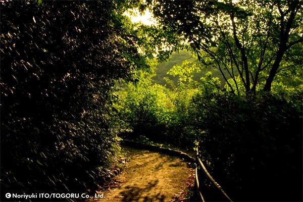 茂みの中を横断する細い道