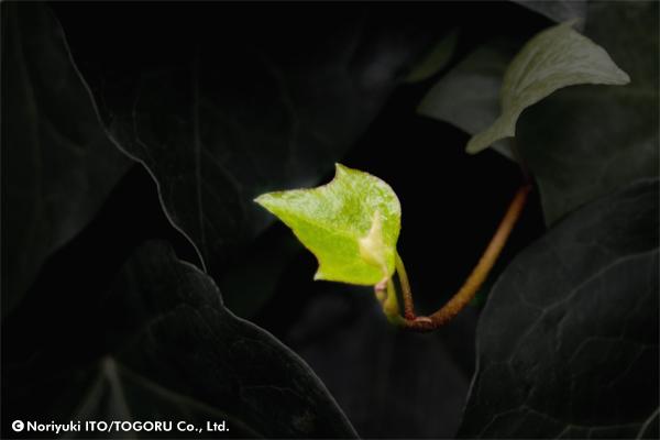 左に向いて生えているつたの葉が左矢印に見える