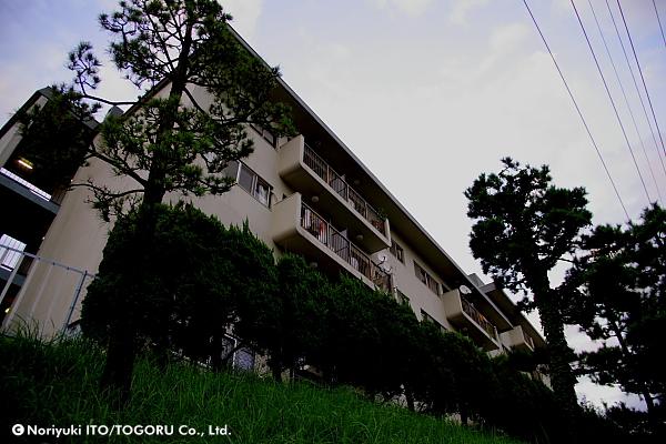 松のある建物
