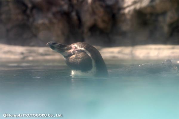 ペンギンの湯