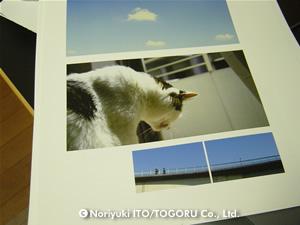 印刷したばかりの写真たち