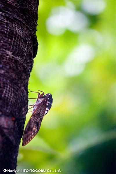 樹に止まっている蝉を真横から見た