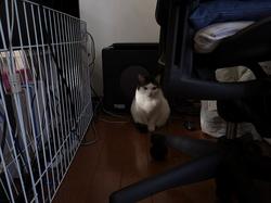 大賀は好奇心がありながらも怖くじっとしている